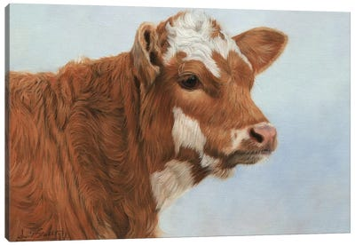 Calf by David Stribbling Canvas Art Print