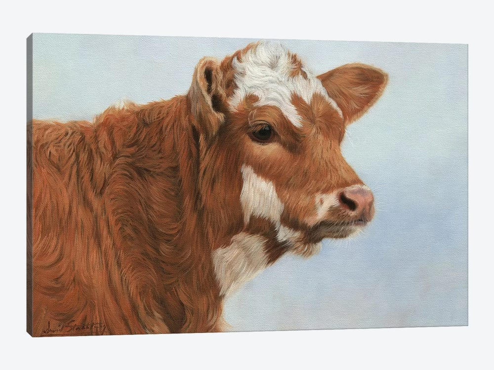Calf by David Stribbling 1-piece Canvas Print