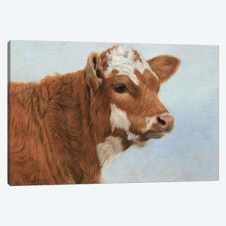 Calf Canvas Print #STG132} by David Stribbling Canvas Art Print