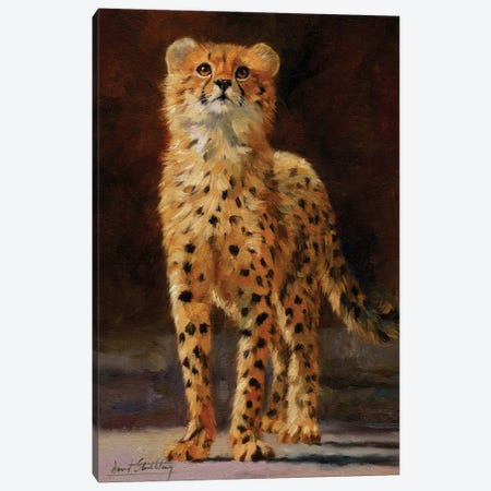 Cheetah Cub II Canvas Print #STG133} by David Stribbling Canvas Print