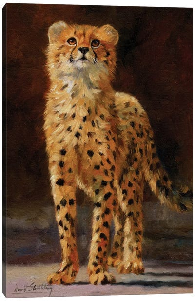 Cheetah Cub II by David Stribbling Canvas Art Print