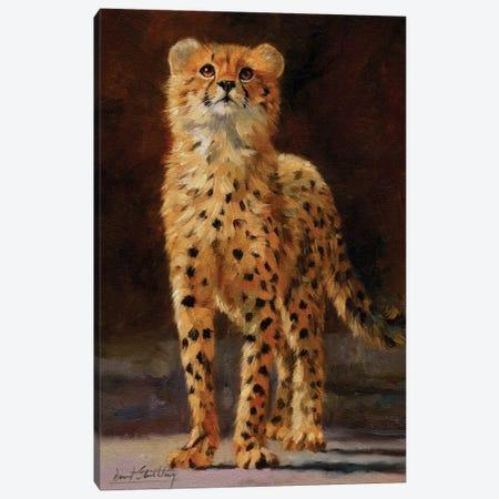 Cheetah Cub II Canvas Print #STG133} by David Stribbling Canvas Print
