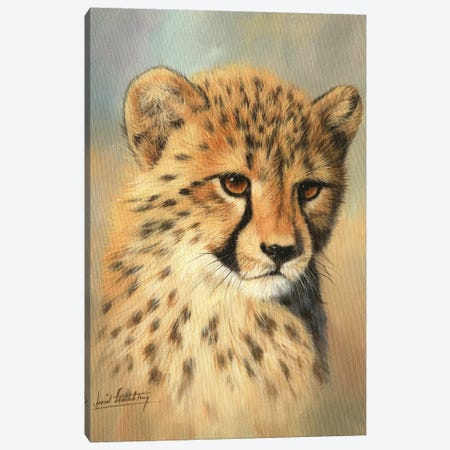 Cheetah Cub Portrait II Canvas Print #STG134} by David Stribbling Canvas Art