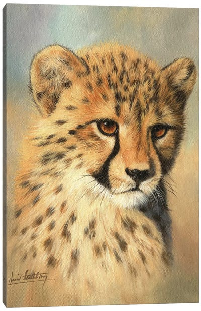 Cheetah Cub Portrait II by David Stribbling Canvas Art Print