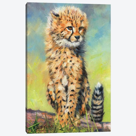 Cheetah Cub Sitting Canvas Print #STG135} by David Stribbling Canvas Wall Art