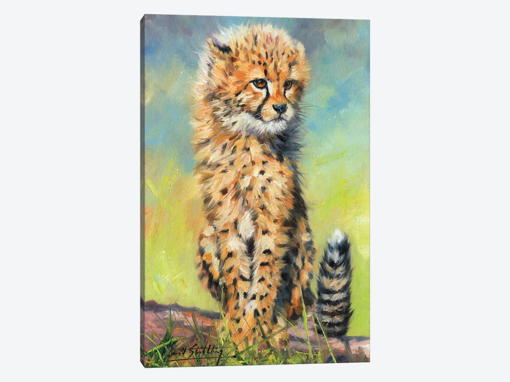 Cheetah Cub Sitting by David Stribbling 1-piece Canvas Wall Art