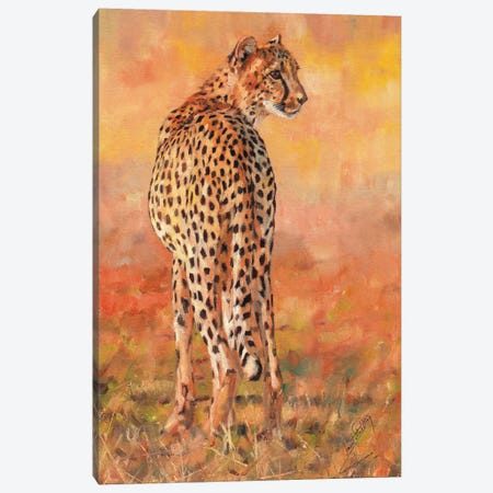 Cheetah Sunset Canvas Print #STG137} by David Stribbling Canvas Art