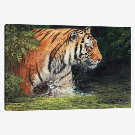 Cool Cat Canvas Print #STG138} by David Stribbling Canvas Print