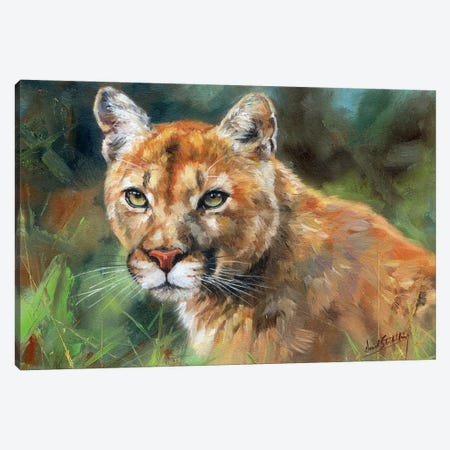Cougar Portrait 3-Piece Canvas #STG139} by David Stribbling Canvas Print