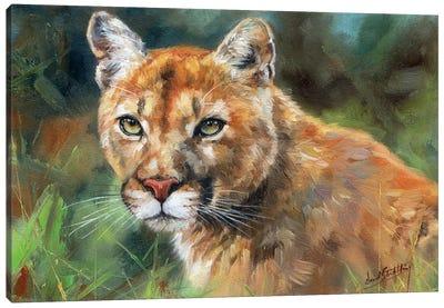 Cougar Portrait Canvas Art Print