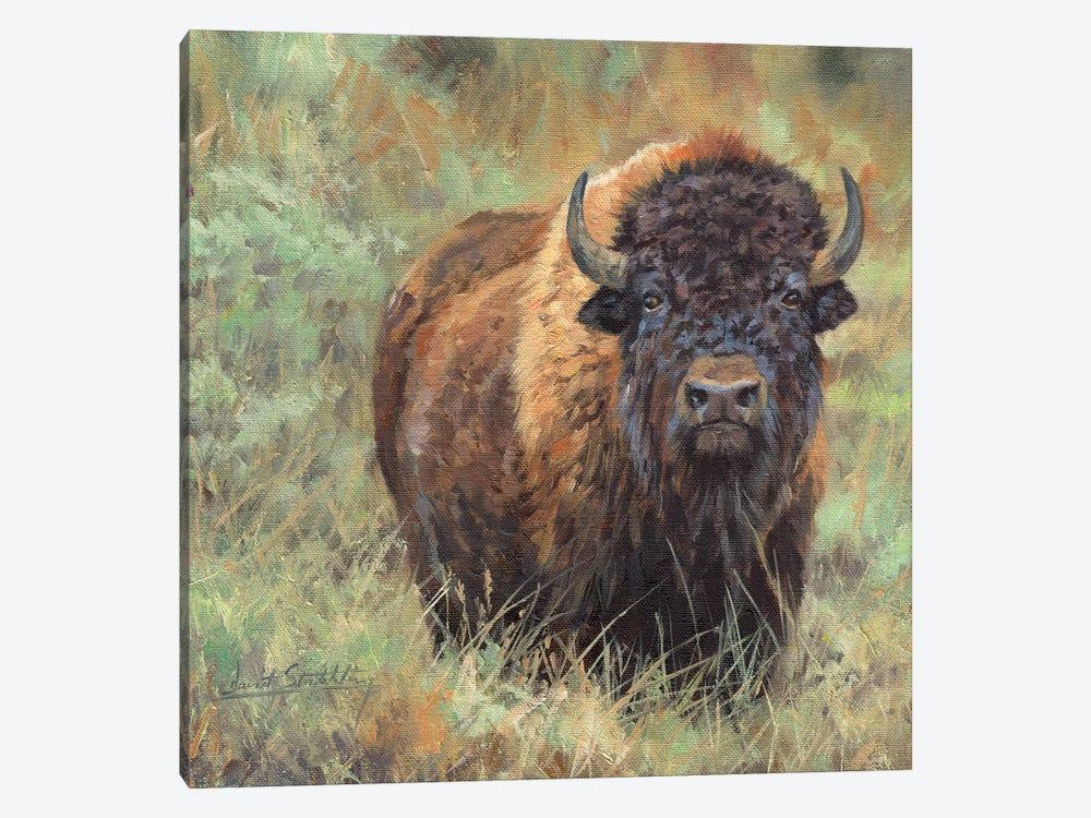 Bison II by David Stribbling 1-piece Art Print