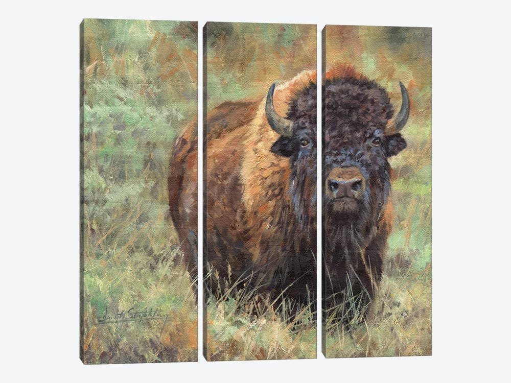 Bison II by David Stribbling 3-piece Canvas Print