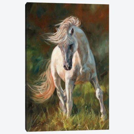 Dance Like No-One Is Watching Canvas Print #STG140} by David Stribbling Canvas Artwork