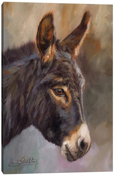 Donkey by David Stribbling Canvas Art Print