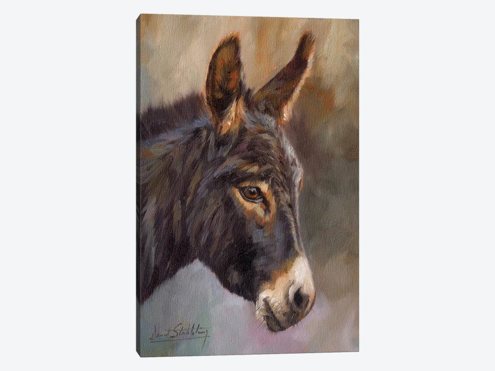 Donkey Canvas Print By David Stribbling Icanvas