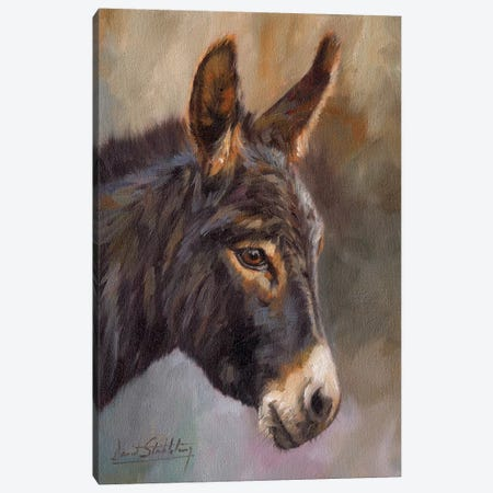 Donkey Canvas Print #STG142} by David Stribbling Canvas Art