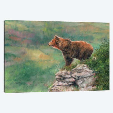 European Brown Bear 3-Piece Canvas #STG143} by David Stribbling Canvas Art