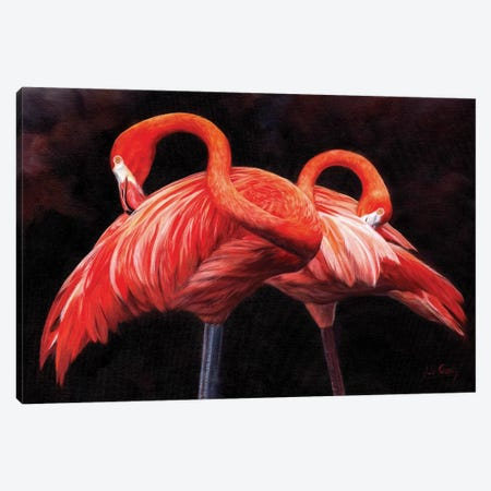 Flamingos Canvas Print #STG144} by David Stribbling Canvas Print