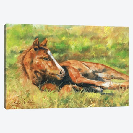 Foal 3-Piece Canvas #STG146} by David Stribbling Canvas Print