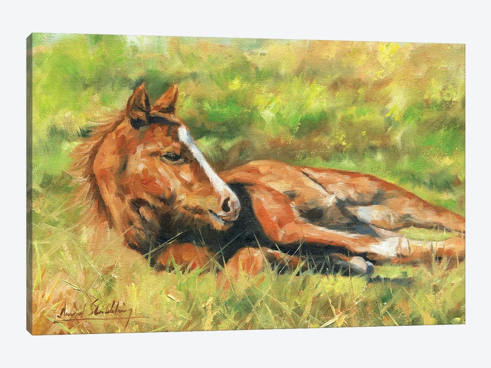 Foal by David Stribbling 1-piece Canvas Artwork