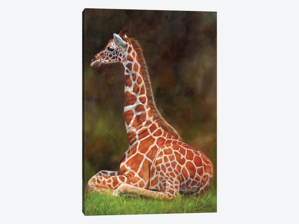 Giraffe Resting by David Stribbling 1-piece Canvas Art Print