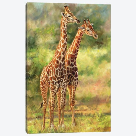 Giraffes Canvas Print #STG148} by David Stribbling Canvas Wall Art