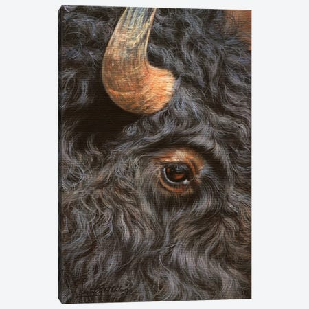 Bison Close-Up Canvas Print #STG14} by David Stribbling Canvas Wall Art