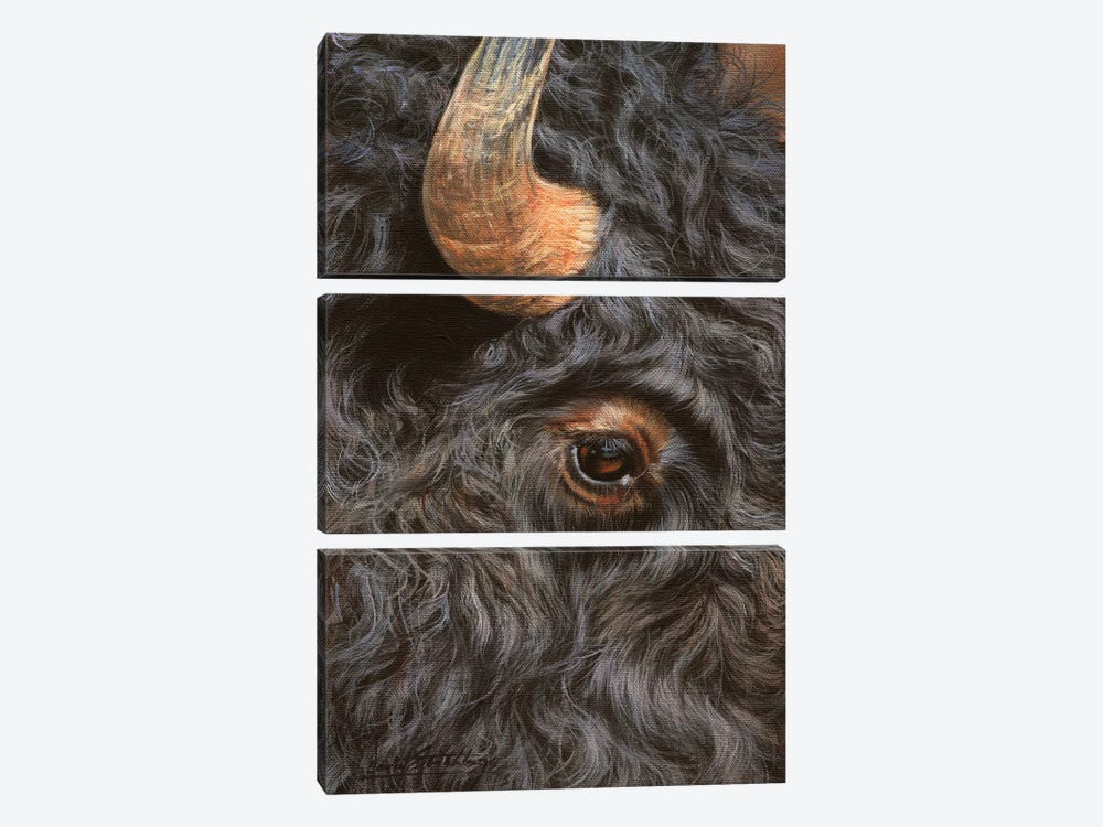 Bison Close-Up by David Stribbling 3-piece Canvas Art