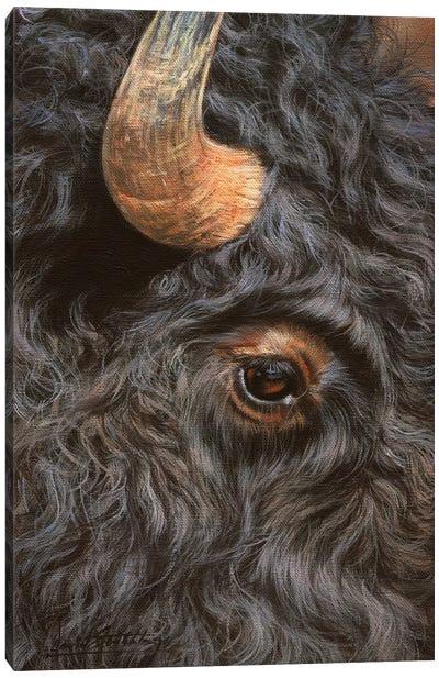 Bison Close-Up Canvas Art Print