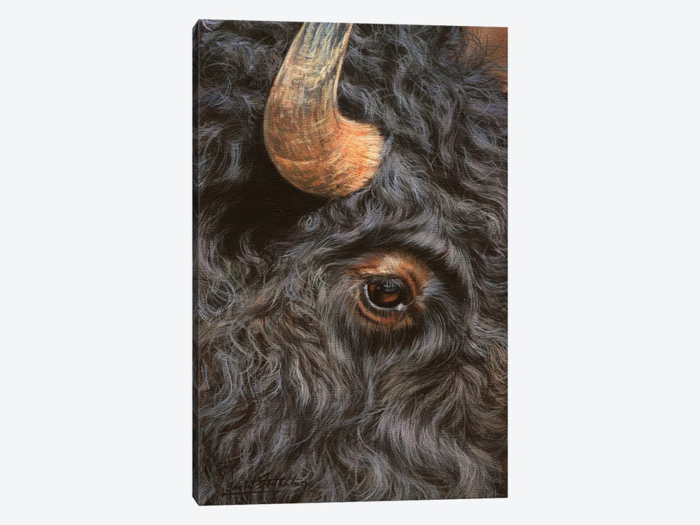 Bison Close-Up by David Stribbling 1-piece Canvas Artwork