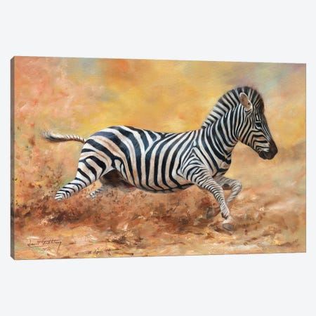 Kicking Up Dust I 3-Piece Canvas #STG150} by David Stribbling Canvas Print