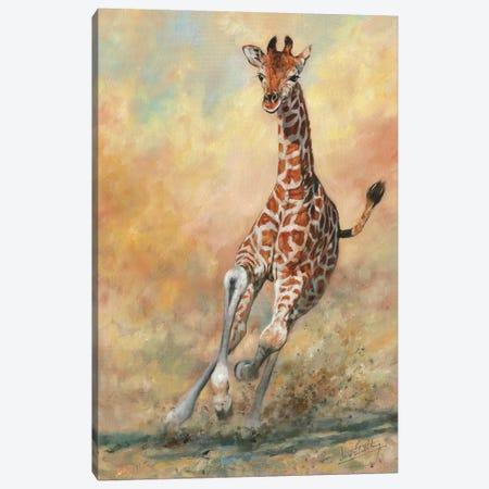 Kicking Up Dust II Canvas Print #STG151} by David Stribbling Canvas Art Print