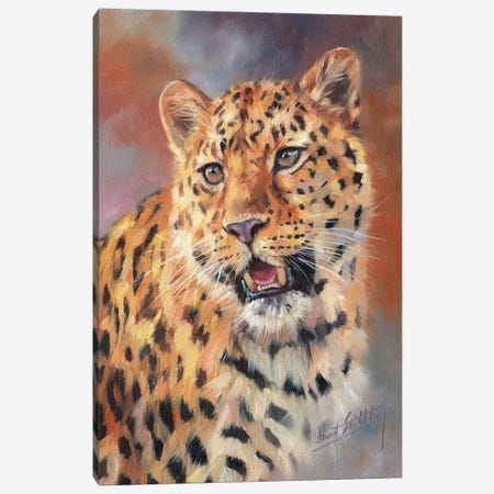 Leopard Portrait 3-Piece Canvas #STG152} by David Stribbling Canvas Art Print