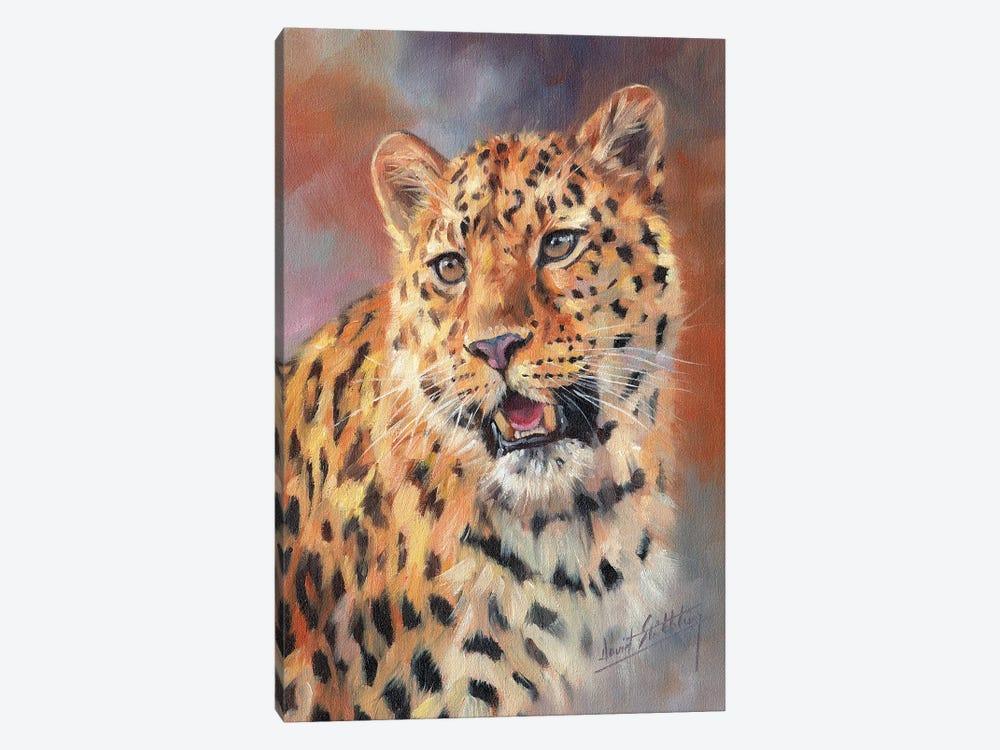 Leopard Portrait by David Stribbling 1-piece Canvas Print