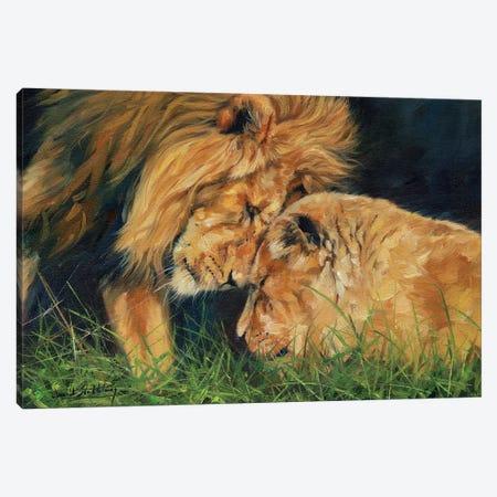 Lion Love Canvas Print #STG153} by David Stribbling Art Print