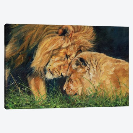 Lion Love Canvas Print #STG153} by David Stribbling Art Print