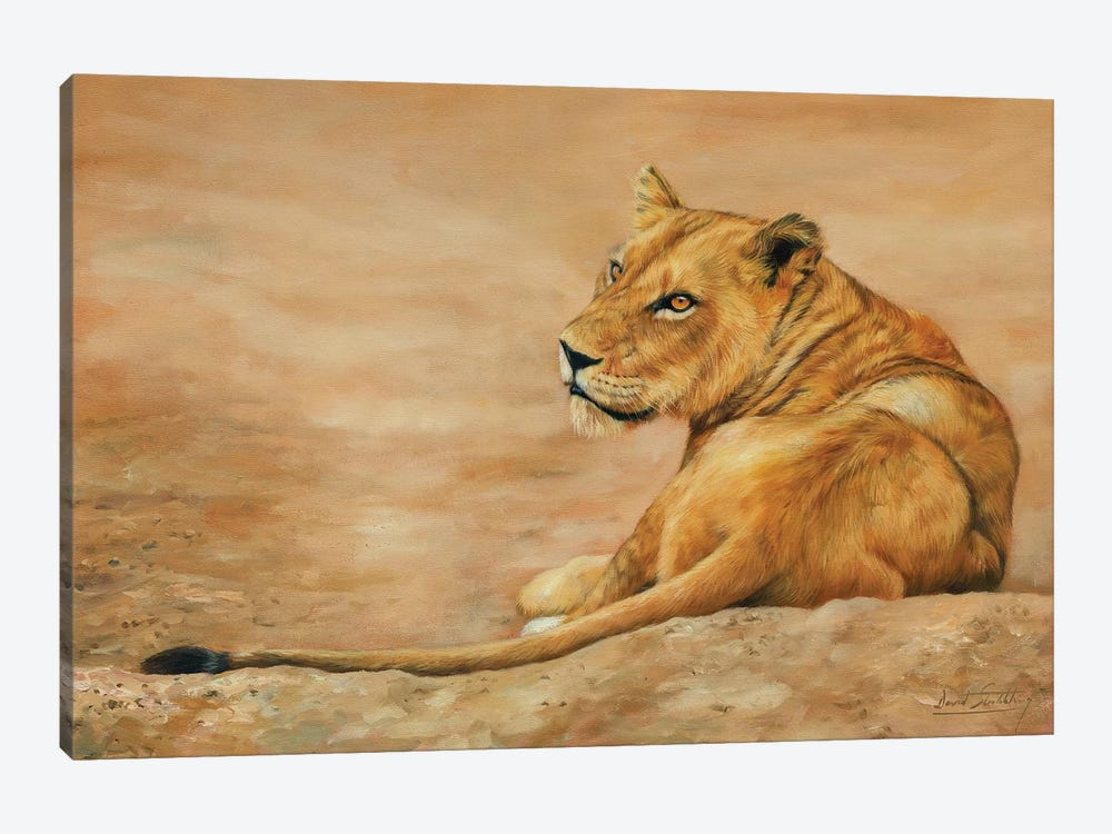 Lioness by David Stribbling 1-piece Art Print