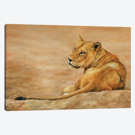 Lioness Canvas Print #STG154} by David Stribbling Canvas Art