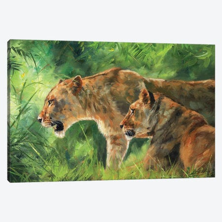 Pair Of Lionesses Canvas Print #STG156} by David Stribbling Canvas Art
