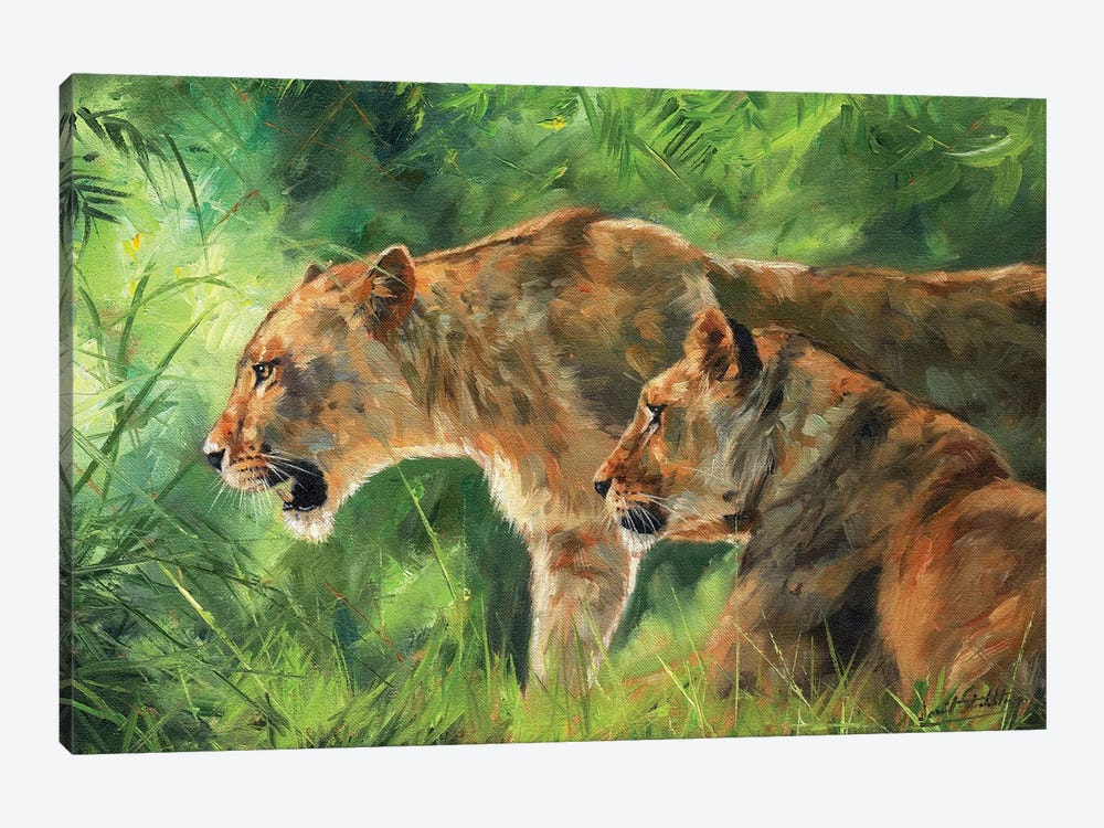 Pair Of Lionesses by David Stribbling 1-piece Canvas Print