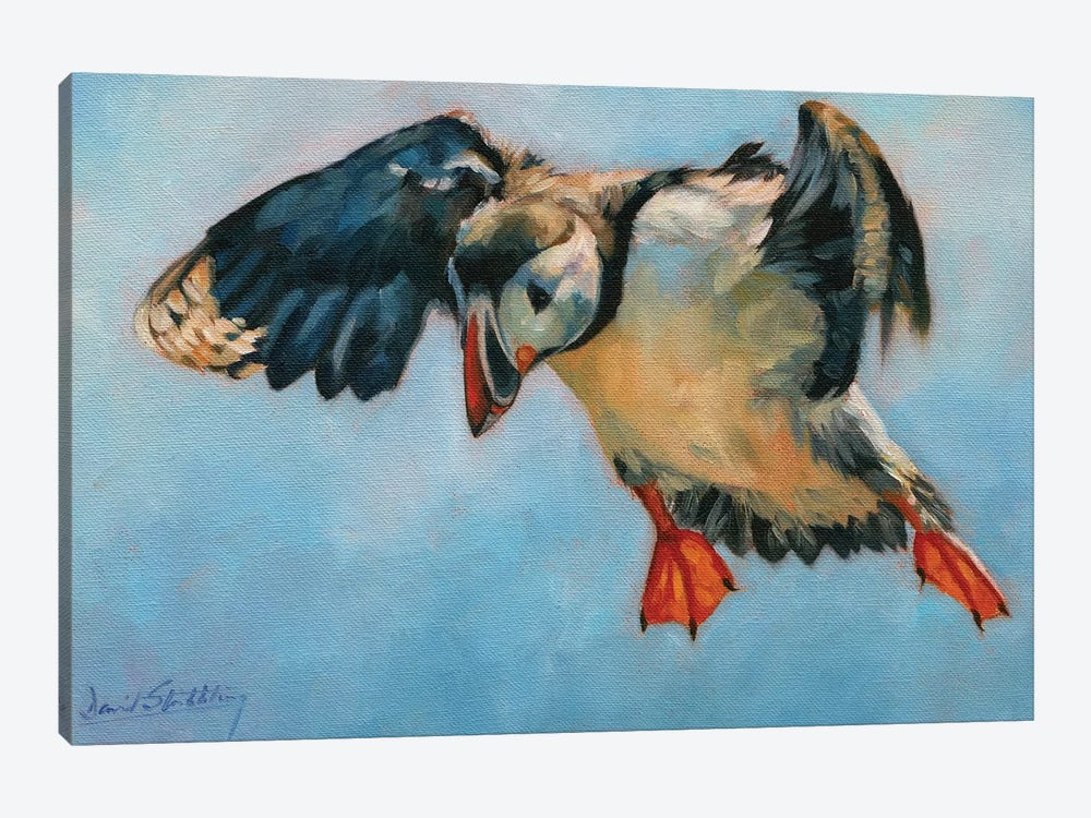 Puffin by David Stribbling 1-piece Canvas Artwork