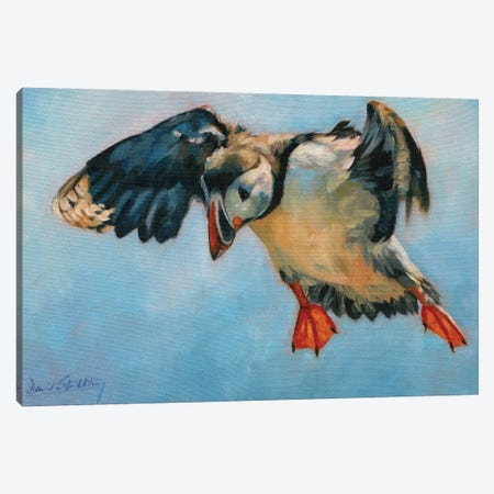Puffin Canvas Print #STG157} by David Stribbling Canvas Art