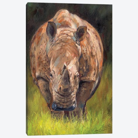 Rhino Canvas Print #STG159} by David Stribbling Canvas Print