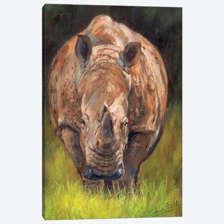 Rhino Canvas Print #STG159} by David Stribbling Canvas Print