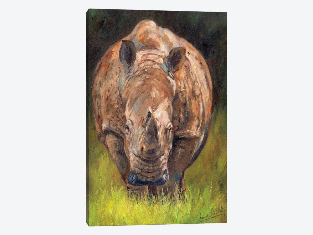 Rhino by David Stribbling 1-piece Canvas Artwork