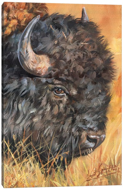 Bison Portrait Canvas Art Print
