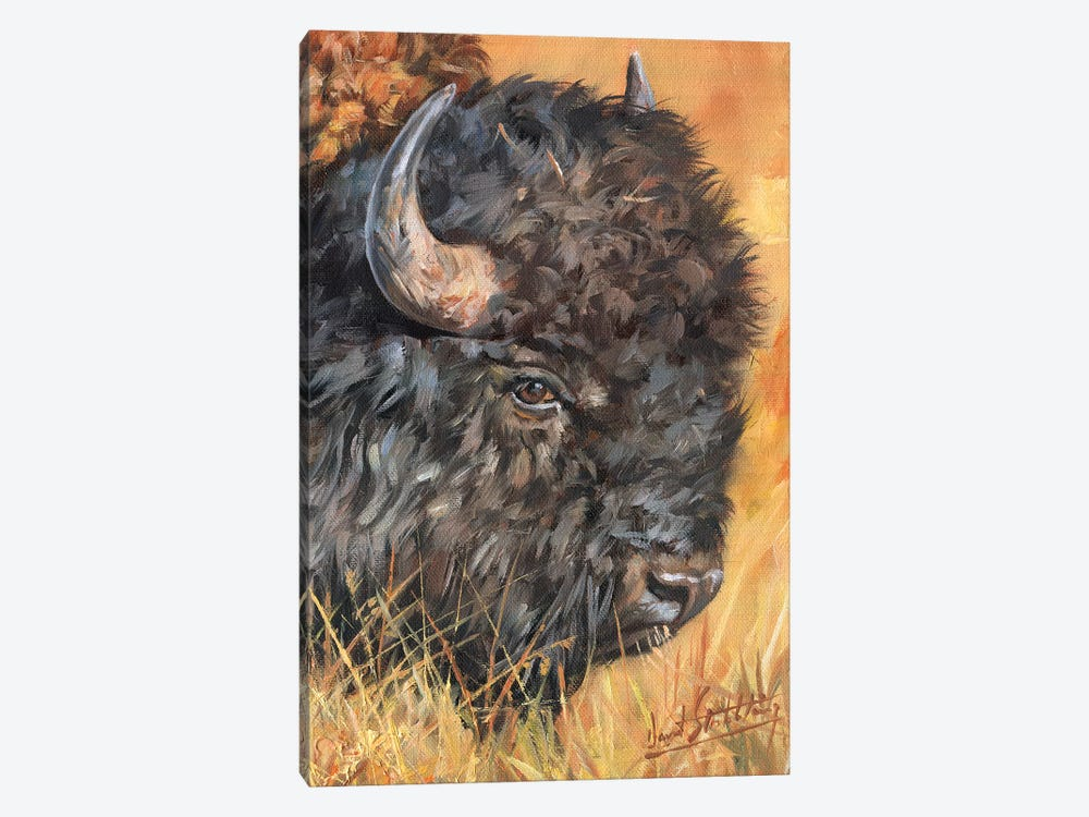 Bison Portrait by David Stribbling 1-piece Canvas Art Print