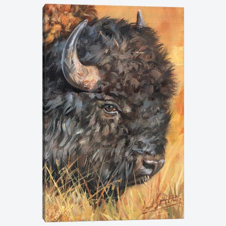 Bison Portrait Canvas Print #STG15} by David Stribbling Canvas Wall Art