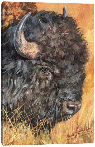 Bison Portrait Canvas Art Print