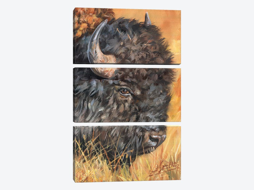 Bison Portrait by David Stribbling 3-piece Art Print